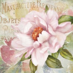 "Robinson""Parfum de Paris 2"". Amazing Home Decor Flower, Ready to Hang Picture in White and Pink"