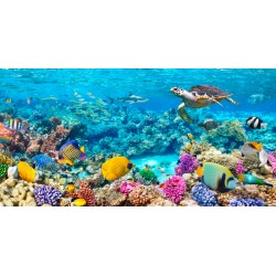 "Pangea""Sea Turtle and fish, Maldivian Coral Reef""- HQ Photo Picture for Home Decor, like an Aquarium"