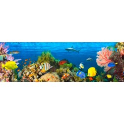 "Pangea""Life in the Coral Reef, Maldives"", HQ Photo Picture for Home Decor, like an Aquarium"