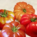 Tomatoes - Remo Barbier on high quality print